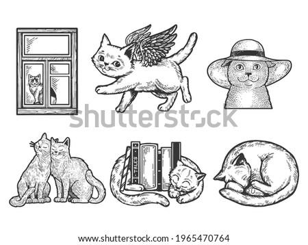 cat pet animal set sketch