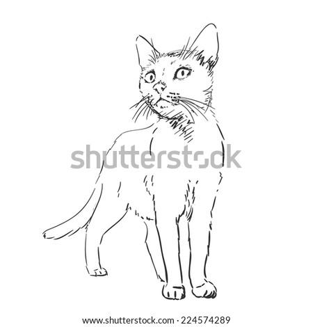 cat sketch  hand drawn