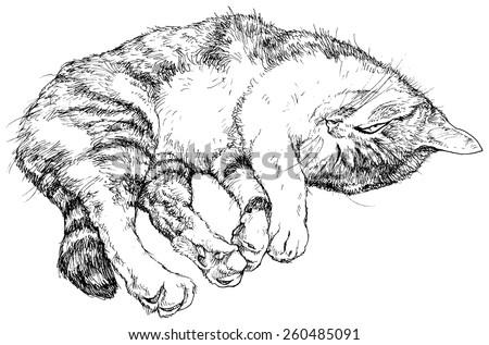 cat sleeps   vector