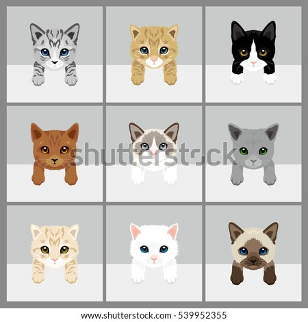 cat vector illustration 9 set
