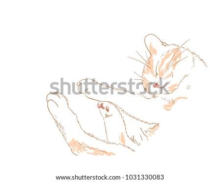 cat vector sketch illustration