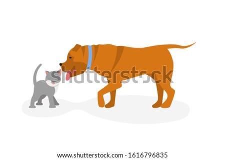 cat vs dog concept dog licked