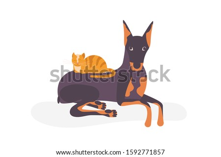 cat vs dog concept the kitty