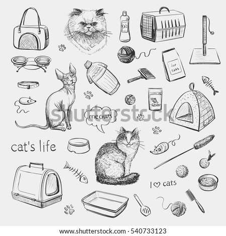 cats and products for cats