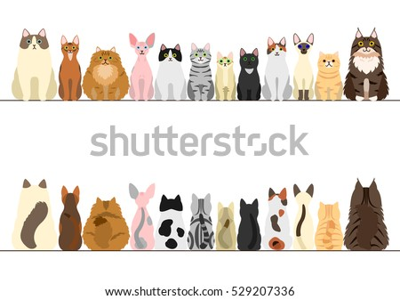 cats border set  front view and