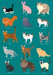 cats breeds set with breed name