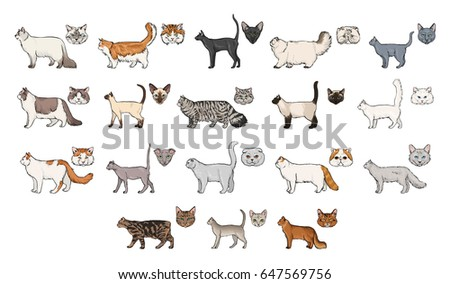 cats breeds  side view and