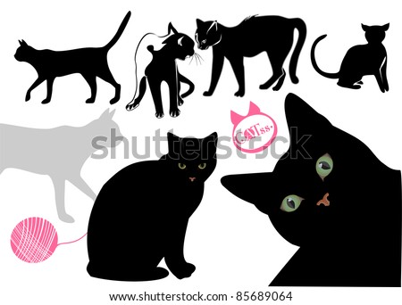 catscatscat's life background