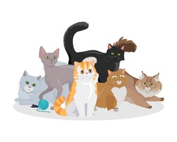 Cats conceptual web banner. Group of different breed cats seating, lying, standing, stretching, playing with ball of yarn flat vector illustration on white background. For pet shop landing page design