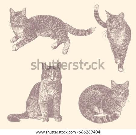 cats design set hand drawn