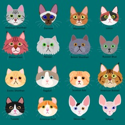 cats face set with breeds name