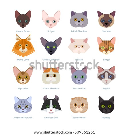 cats faces collection vector