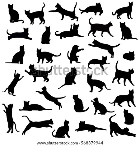 Cats, Isolated On White Background