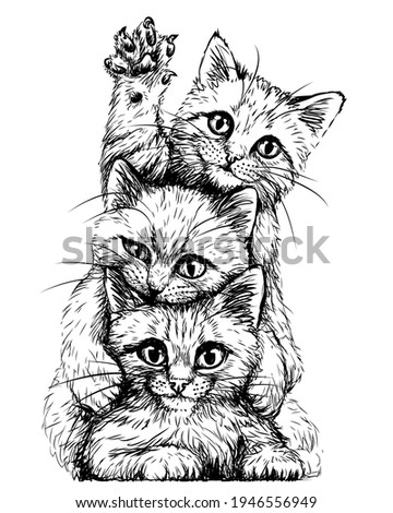 cats wall sticker graphic