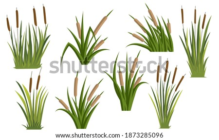 Cattail set. Vector illustration eps10. Stockfoto ©