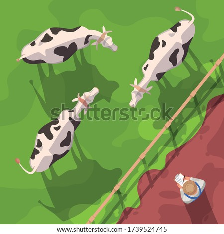Cattle semi flat vector illustration top view. Domestic animals on ranch field. Farm worker check on cows. Agribusiness and agriculture. Farmer 2D cartoon character for commercial use