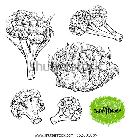 Cauliflower. Vintage collection of cauliflower in different angles. Isolated elements. Black and white hand drawn vector illustration