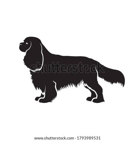 Cavalier King Charles Spaniel dog - isolated vector illustration Photo stock ©