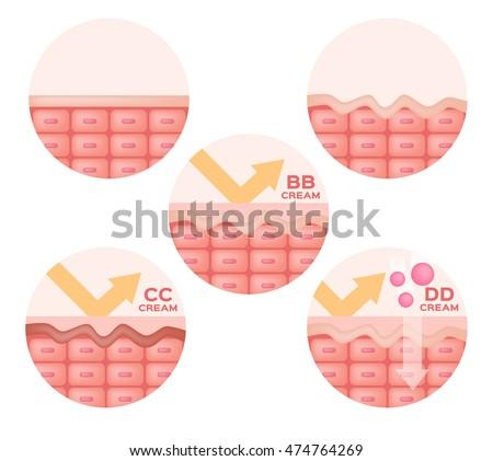 cc   bb   dd cream and skin