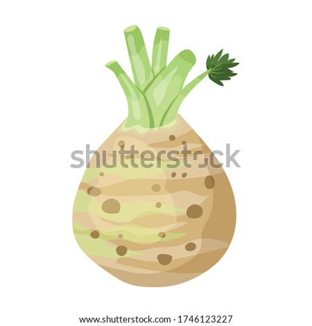 Celery root vector icon.Cartoon vector icon isolated on white background celery root. Photo stock ©