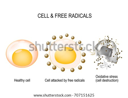 cell and free radicals healthy