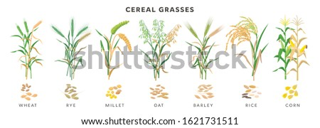 cereal grasses big collection