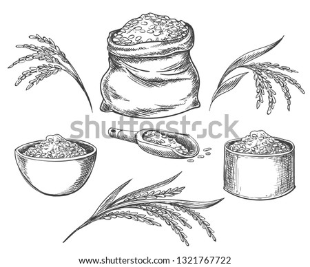 Cereal rice. Hand drawn grained rice seed isolated on white background, healthy eating grains, cereals and bread vector illustration