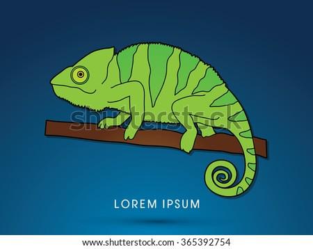 chameleon graphic vector