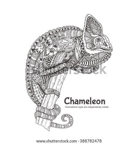 chameleon hand drawn chameleon