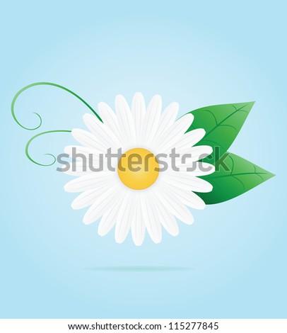 Chamomile flower. Vector illustration