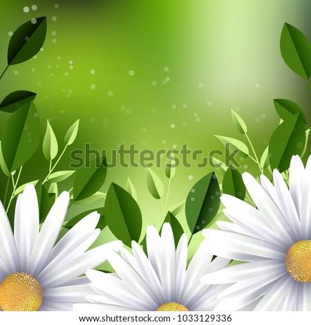 chamomile flowers background