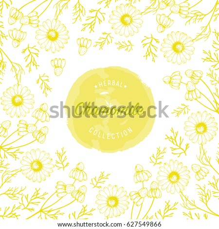 Chamomile flowers vector design background for  tea, natural cosmetics, baking, health care products, packaging, wrapping paper.