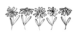 Chamomile hand drawn black paint vector set. Ink drawing flowers, monochrome artistic botanical illustration. Isolated floral elements, daisy, aster, chrysanthemum. Brush strokes outlined clip arts