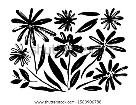 Chamomile hand drawn paint vector set. Ink drawing flowers and plants, monochrome artistic botanical illustration. Isolated floral elements, hand drawn illustration. Brush strokes silhouette.
