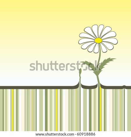 chamomile  which has grown