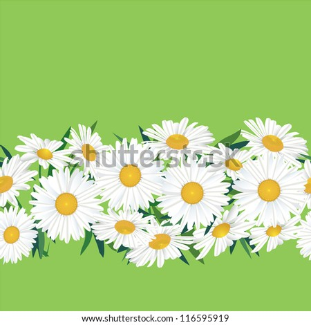 Chamomiles seamless floral vector border. White flower garland on green background