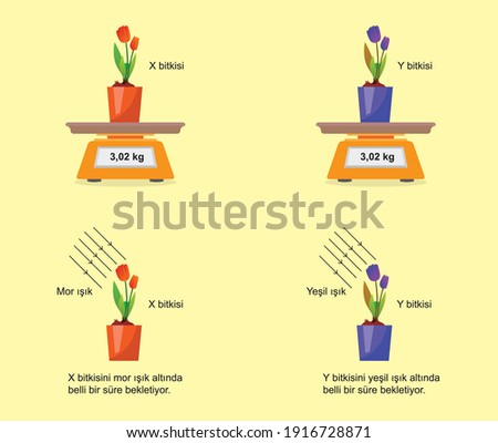 change of photosynthesis under light pot and flower science lesson Stok fotoğraf ©