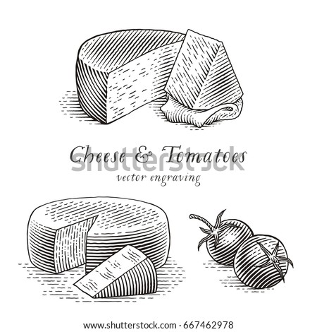Cheese and tomatoes set. Hand drawn engraving style illustrations. Vector illustration.