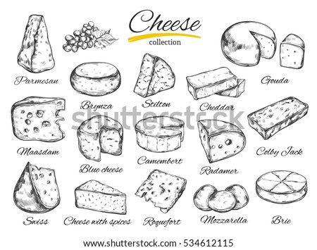 Cheese collection. Vector hand drawn  illustration of cheese types . Isolated on white