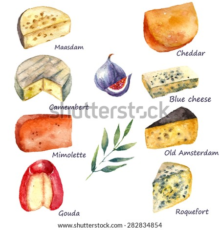Cheese making various types of cheese set of watercolor illustration on a white background with green twig and figs. Vector.