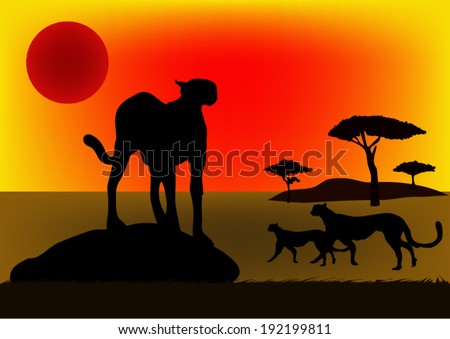 cheetah in africa at sunset