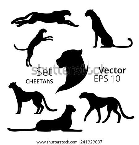 Cheetah set vector