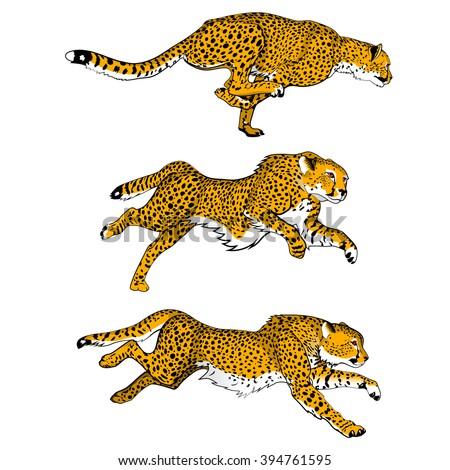 cheetahs set of three colored