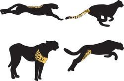 Cheetahs, silhouette