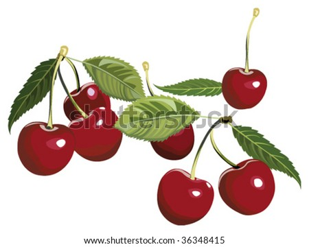Cherries - stock vector