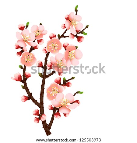 cherry blossom branch abstract