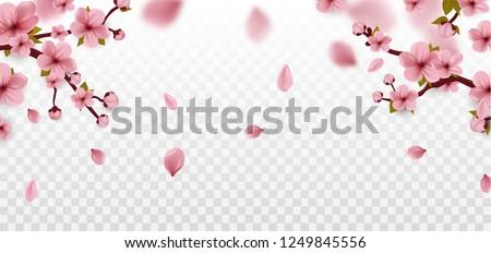 Cherry Blossom branch. Sakura flowers Isolated on white. Spring. Vector