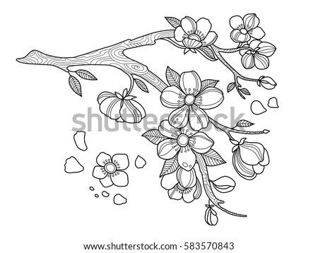 cherry blossom coloring book