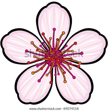 Cherry Blossom Flower Stock Vector 69074518 : Shutterstock