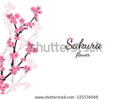 cherry blossom flowers